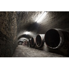 Fototapeta tunel winnicy 2958